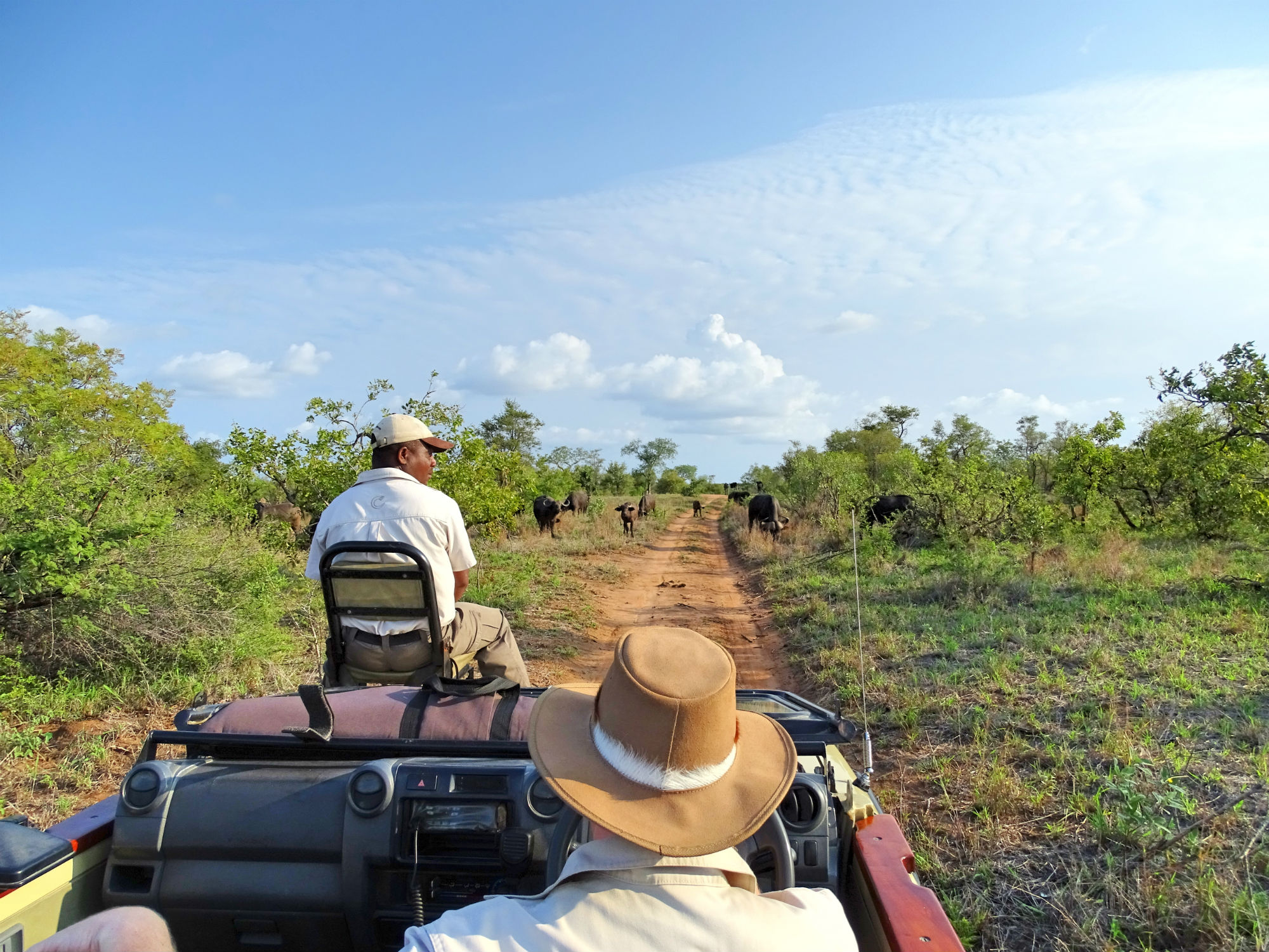 Game Drive im Krüger National Park