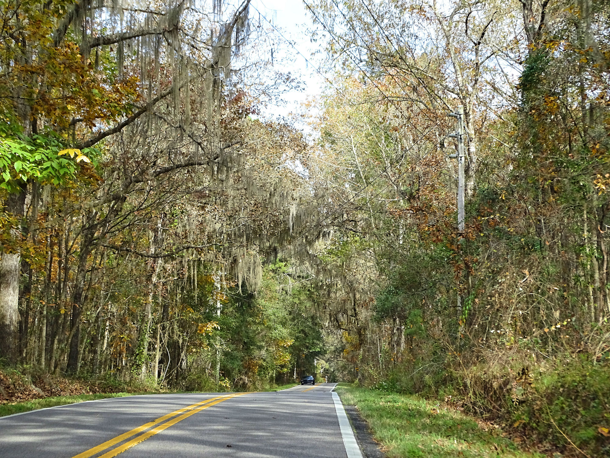 Canopy Road, Tallahassee