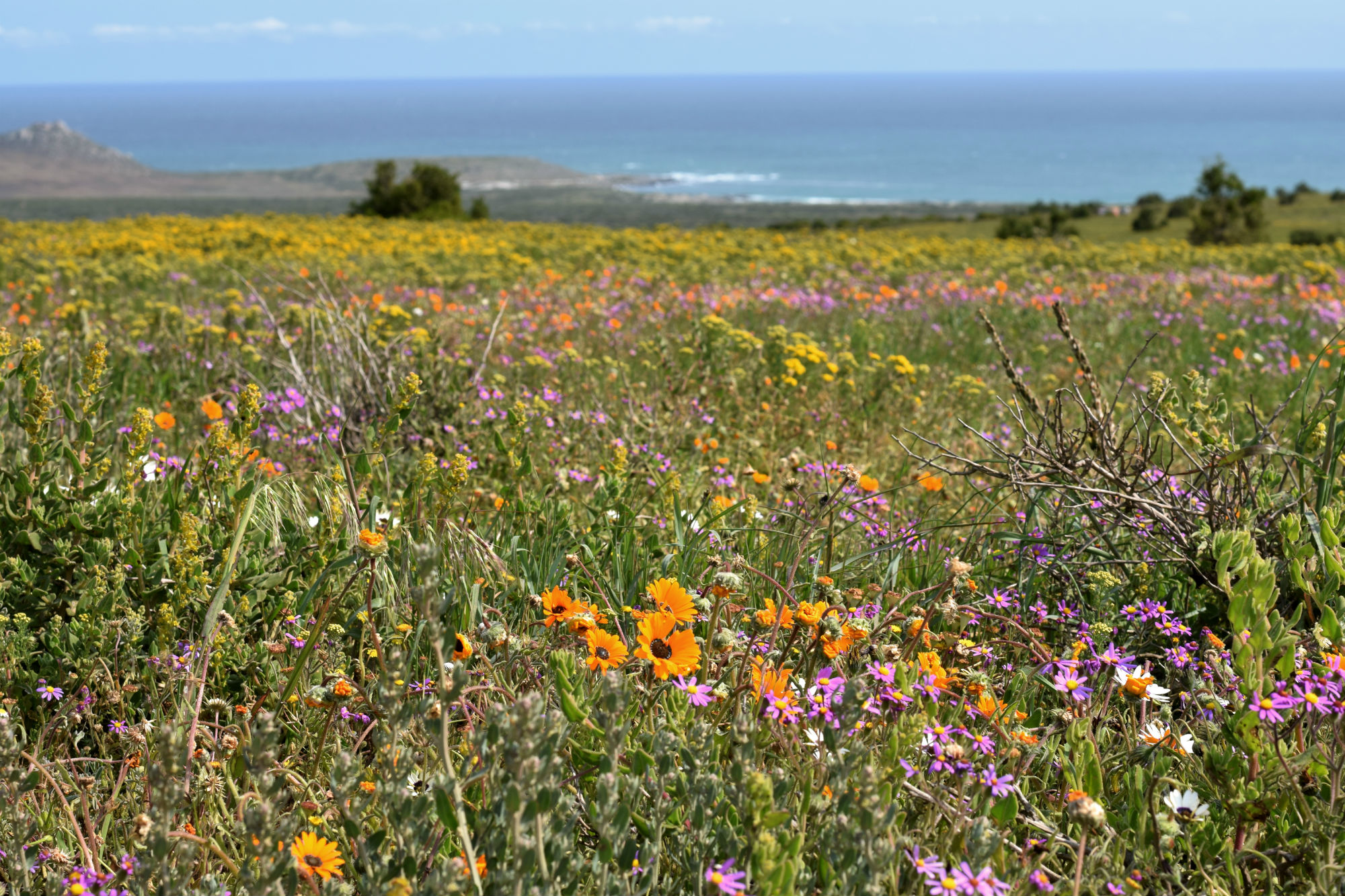 Flower Season im West Coast National Park