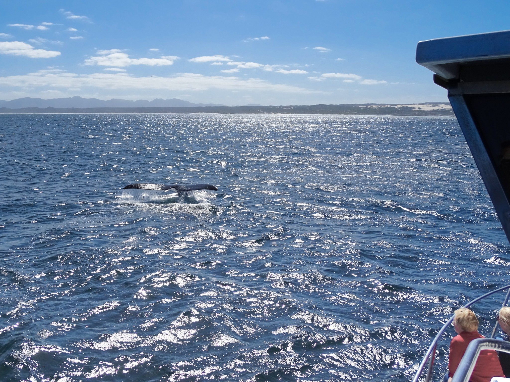 Whale Watching Tour Südafrika